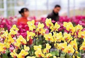 2019廣東翁源蘭花旅遊文化節開幕