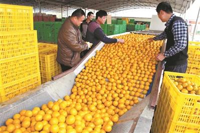 粵三地上榜特色農産品優勢區