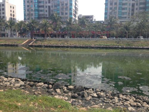 深圳今年將全面消除黑臭水體