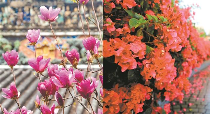 春雨朦朧 春花爭發