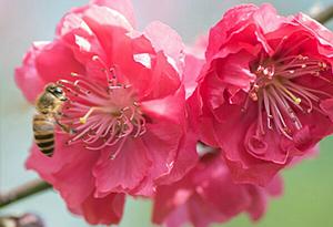踏春好時節,賞花勝地打卡走起