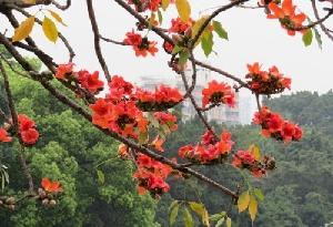 廣東:今明維持暖濕 21日夜間起冷空氣攜雨來襲