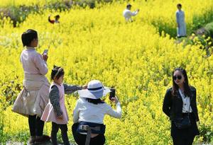 驢媽媽發布清明出遊消費報告:文化體驗遊、踏青賞春兩相宜