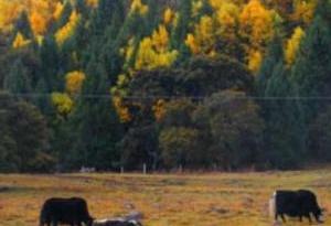 """西藏林芝特色産品在深圳設直銷點 """"消費援藏""""助力脫貧"""