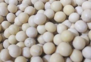 科普|豆芽比豆子更營養嗎?