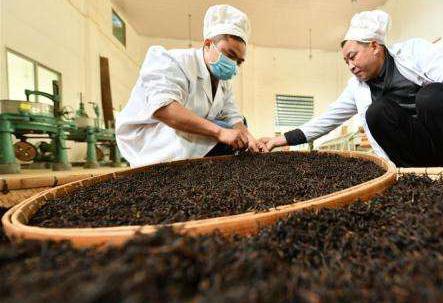英德引資17億打造特色紅茶小鎮