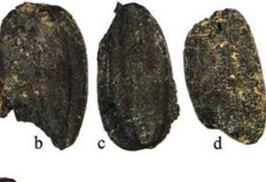研究證實,水稻至少在4400年前就已到達珠江三角洲