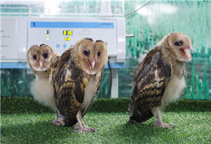 廣州長隆開放鳥類繁育中心