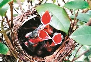 海珠濕地鳥類增至177種