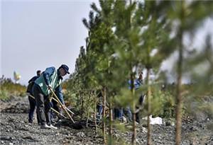 研究説全球植樹潛力大 有望儲存大部分碳排放