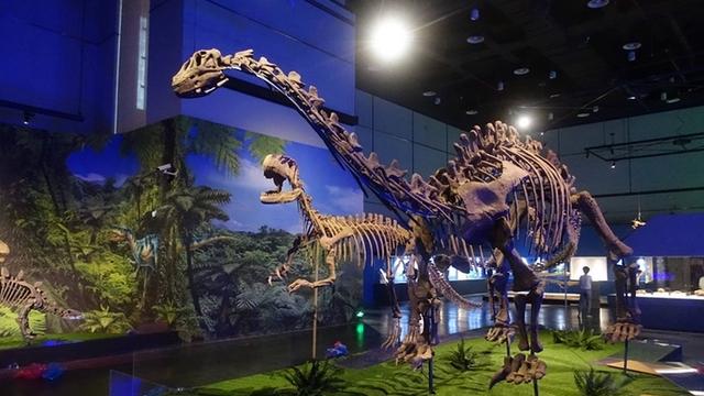 """暑假來博物館看""""群龍出沒"""" 探索恐龍奧秘"""