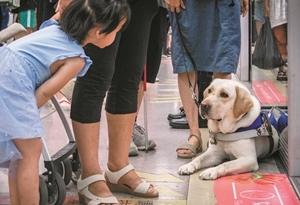 """導盲犬""""身份證""""多 上地鐵有點難"""