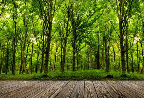 廣東森林生態效益20年增加近4倍