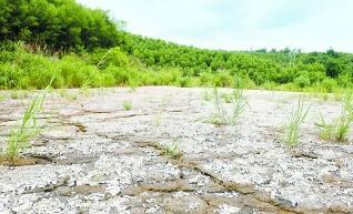 雲浮公益訴訟向涉黑組織追償生態資源損失近2000萬