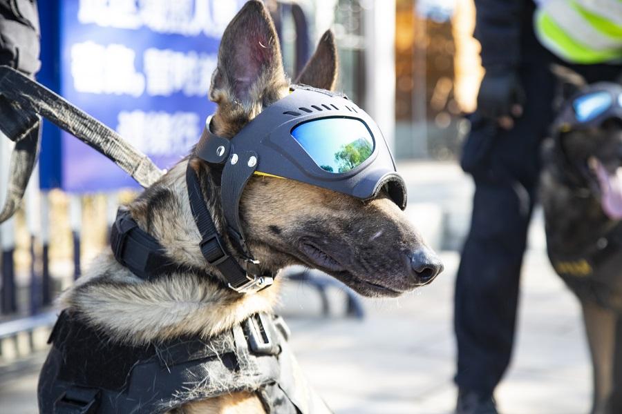 新年新氣象 警犬換新裝