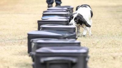 帥!南沙公安萌犬戰警創造營歡樂開營