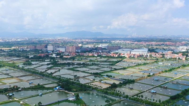 直播大灣區丨首屆中國加州鱸産業鏈年會在佛山南海九江舉行