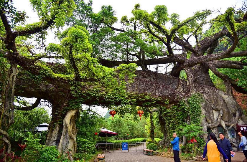 這個景區大門好神奇 石樹上面長真樹