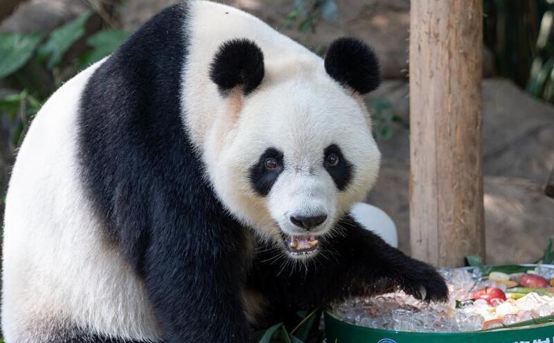 """迎中秋,在長隆:與熊貓""""萌帥酷""""猜燈謎、吃月餅"""