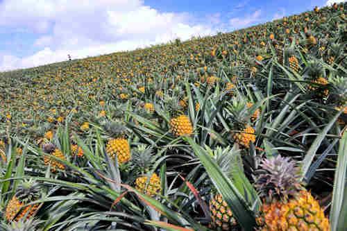 菠萝仓社区风景