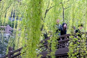 春色滿泉城