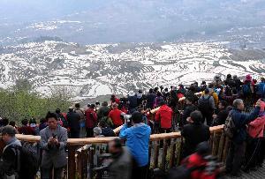 雲南:壯美梯田吸引八方遊客